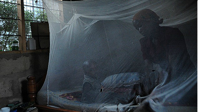 malaria-story-top