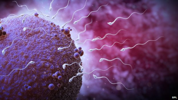 Older sperm donors 'just as good'