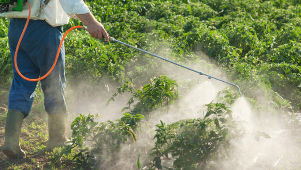 Pesticide exposure during pregnancy may increase autism risk