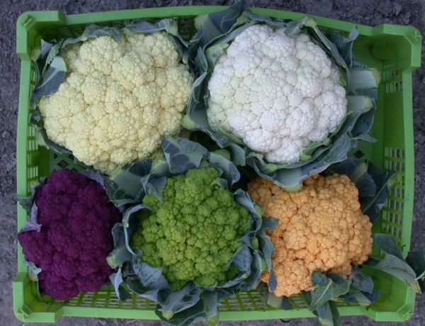 Prevent development of heart disease and cancer by eating cauliflower