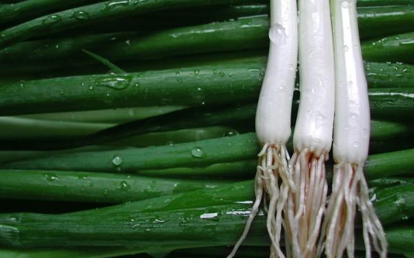 spring-onions2