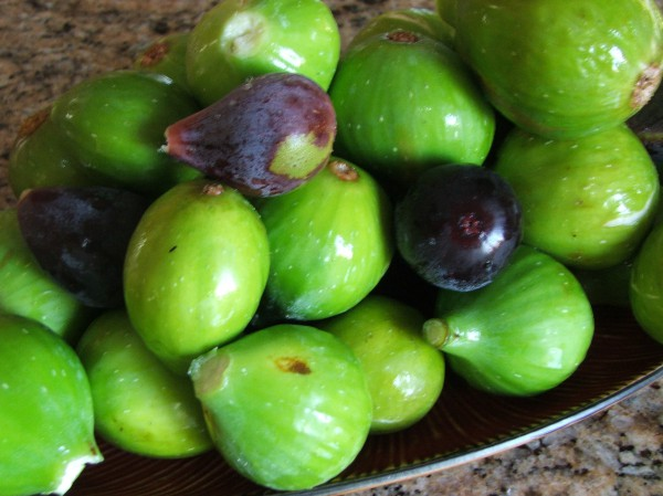 Figs the Miracle Fruit