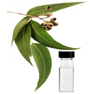 how to use eucalyptus oil