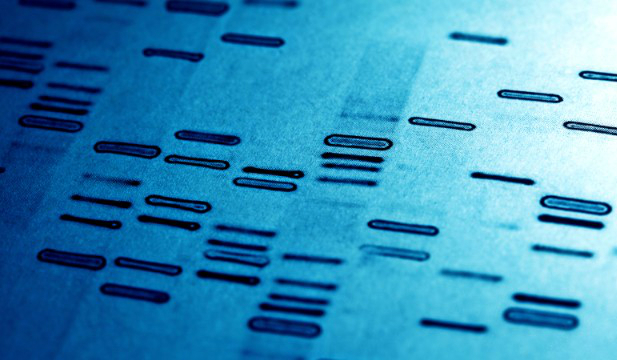 Genetics play a bigger role than environmental causes for autism