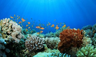 Drug derived from Caribbean reefs may treat psoriasis, MS
